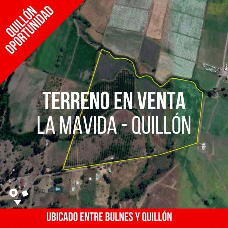 CAMPO DE 15 HECTÁREAS CON PRODUCCIÓN DE NOGALES - QUILLÓN